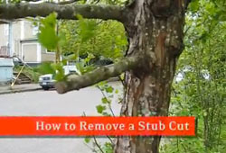 dr_tree_how_to_remove_a_stub_cut